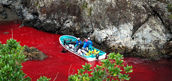 Dolphin Killing from The Cove