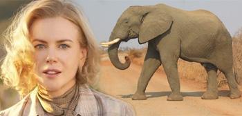 Nicole Kidman / Elephant