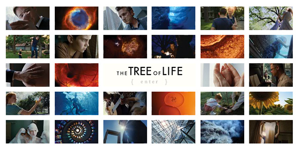 The Tree of Life Website - Two Ways Through Life