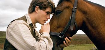 War Horse Photo