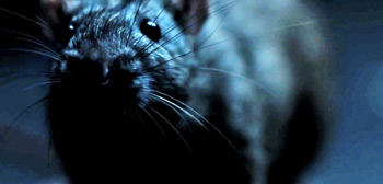 Morgan Spurlock's Rats Trailer