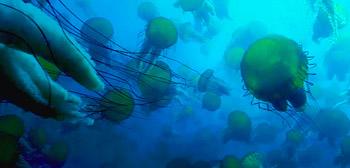 Disneynature's Oceans Trailer