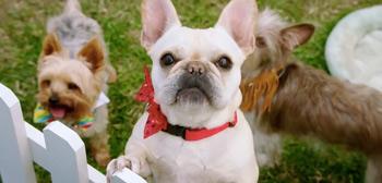 Dog Days Trailer