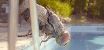 Mandibules Teaser Trailer
