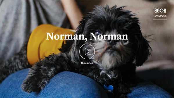 Norman, Norman Short Film