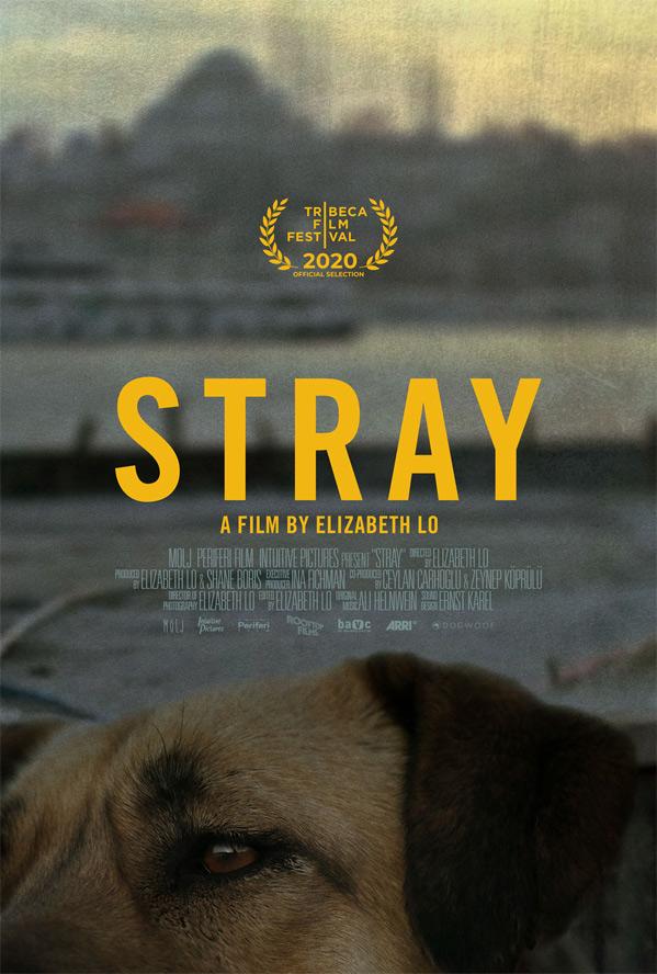 Stray Doc Film