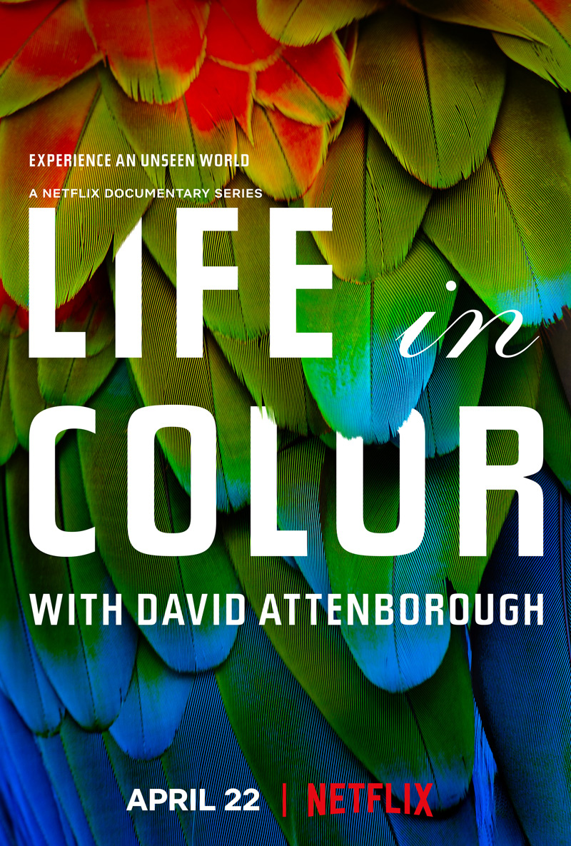 Life in Color with David Attenborough Poster
