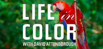 Life in Color with David Attenborough Trailer