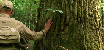 The Hidden Life of Trees Trailer