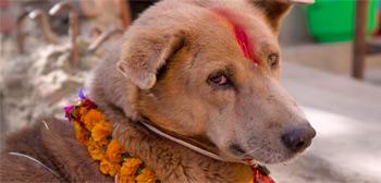 We Don't Deserve Dogs Trailer