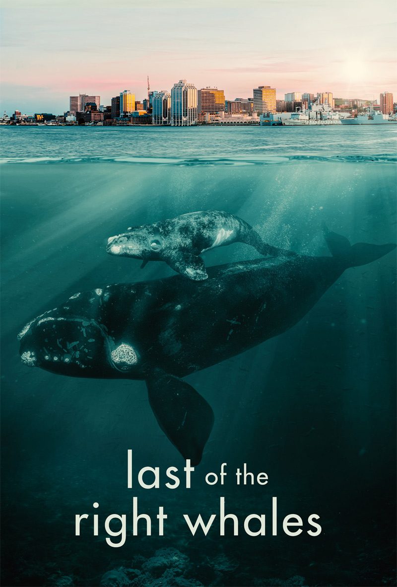 Last of the Right Whales Poster