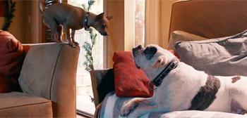 Pups Alone Trailer