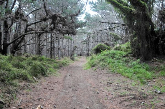 Evil Dead Woods Picture