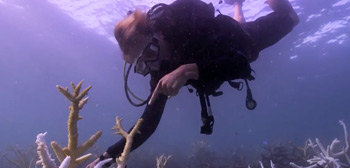 Chasing Coral Doc Trailer