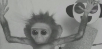 Monkey Love Experiments Short Film